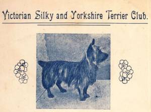 The Silky Terrier 1904