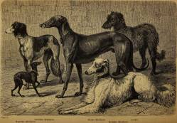 Sighthounds France 1870