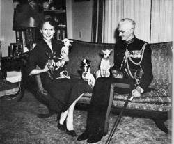 Hilary Harmar and husband with their Chihuahuas in Mexico pre-1955