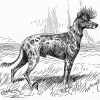 Chinese Crested Dog 1896