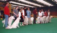 Group of Kuvasz 1996