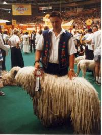 Komondor in Hungary 1996