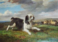 English Sheepdog 1843
