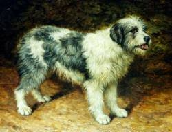 English Sheepdog c 1890