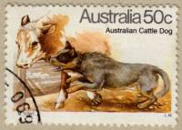 Cattle Dog Stamp 1980